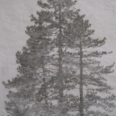 Beatrice Münger, group of pines, 37x34cm, 2013