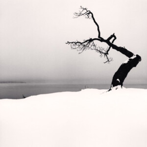 Michael Kenna: Kussharo Lake Tree, Study 5, Kotan, Hokkaido, Japan, 2007