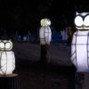 Simon Broggi, Kai Jauslin, Ursina Wirz - Snowy Owls / Intervention_2