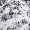Werner Casty - Schnee von gestern