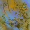 Rachel Schmidhofer - Photosynesthesia