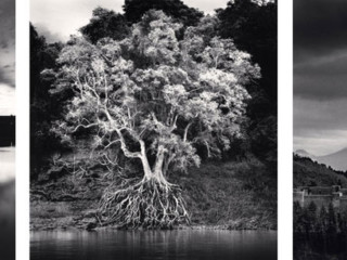 Michael Kenna (left to right): Rouge, Study #14, Dearborn Michigan, 1993, Kokdua Tree and Exposed Roos, Mekong River, Luang, Prabang, 2015, Piccolomini Castle, Celano, Abruzzo, 2016