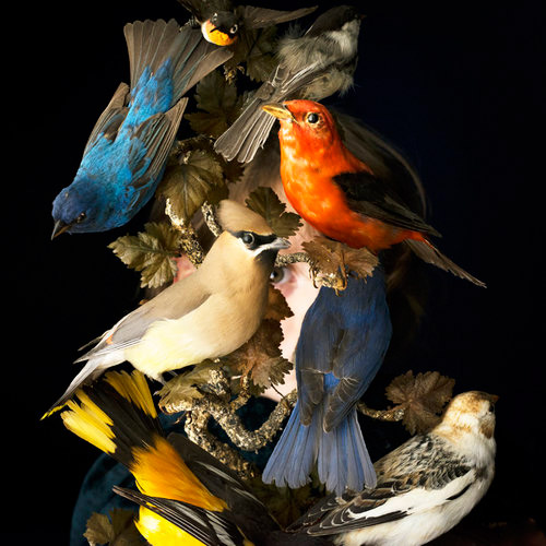 Artist Talk: Cig Harvey - You An Orchestra You A Bomb