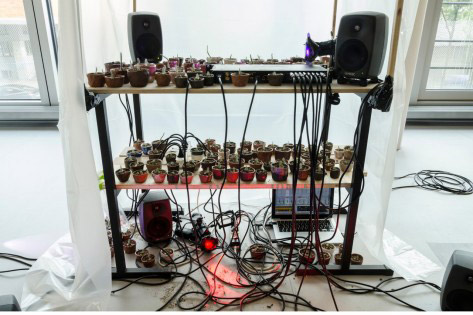 Performance: Invisible Voices - Encounters of Non-Human Sounds Part 1