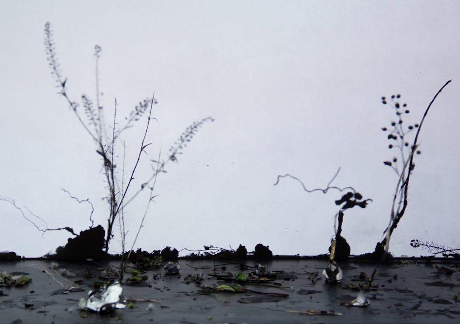 Ursula Palla - empty garden