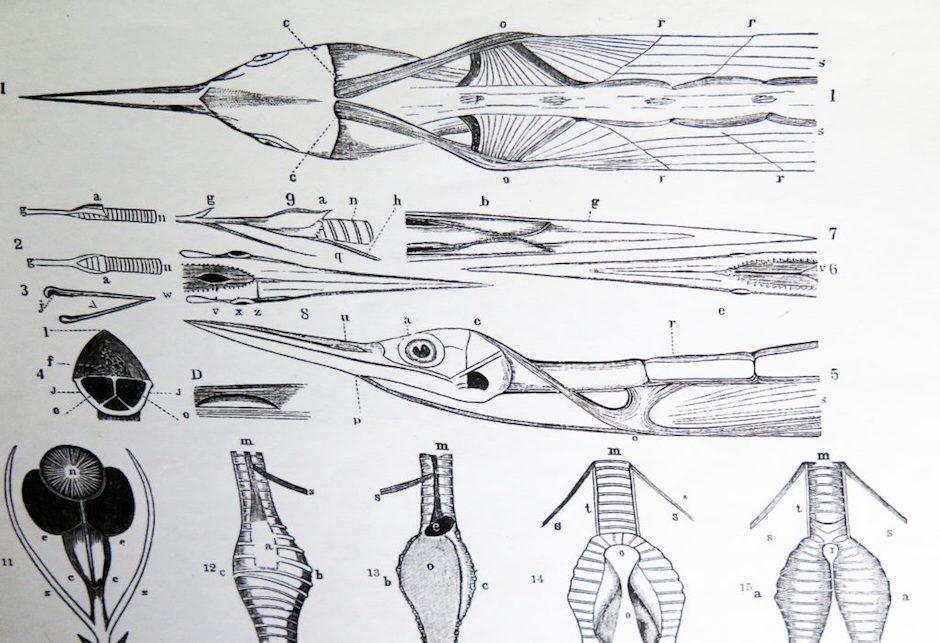 Elisabeth Strässle - Catalogue d'oiseaux
