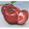 Guided tour: Der Apfel. Eine Einführung. (Immer und immer und immer wieder)