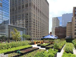 urban_agriculture1